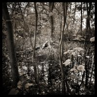 Woodland Pond by grimleyfiendish