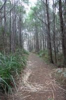 Forrest Path Stock 5 by CNStock