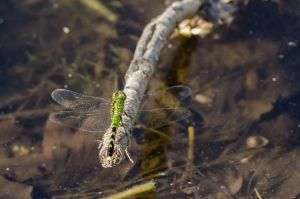 Green DragonFly by stockphotosource