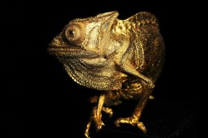 Gilt Chamaeleon Taxidermy Mount by Meddling-With-Nature