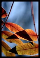 autumn leaves 1 by sergiemag