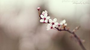 Spring is the muse of nature by FeliDae84