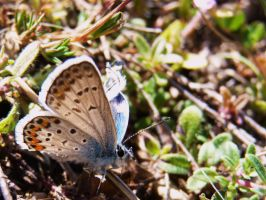 butterfly close up by PiccolaGhI