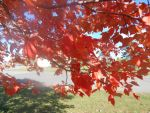 fall color7 by kingbob24
