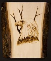 Eagle woodburning by AllieRaines