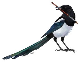 Painterly Magpie by winternacht