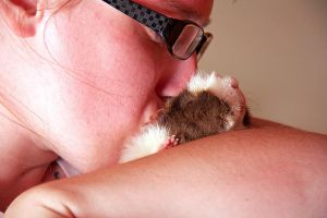 Guinea Pig Love by shellybelly1989