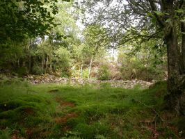 Nature photo album, 10 of 16 by A-Pancake