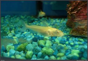 Fish Stock 0052 by phantompanther-stock