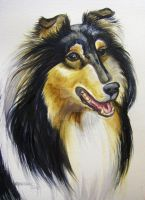 Tri Color Collie by HouseofChabrier