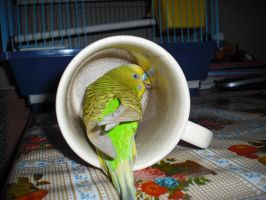 Parrot in a jug by Storm1287