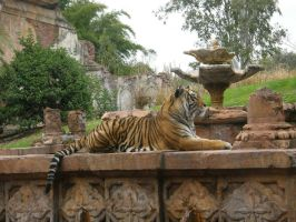 Tiger 2 by D-is-for-Duck