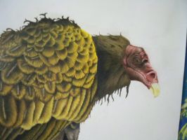 vulture skull close up by the-jabber-wocky