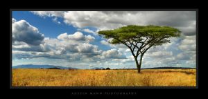 Solitude on the African Plain by atomicpixel