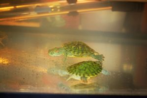 turtles by x-chriscross-x