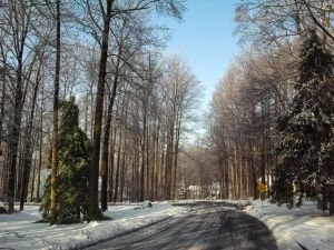 Icy Road by RowyeStock