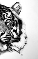 Half series-Sumatran Tiger by salt25
