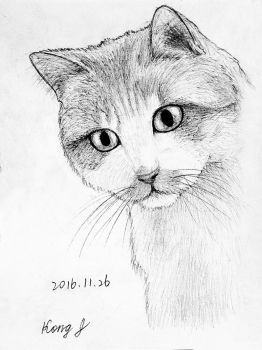 20161126 by cat8080