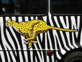 Cheetah Painting on Para-Transit Van by silvercrossfox