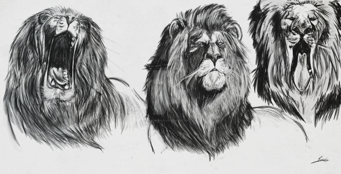 Lion Sketches by rvganimation