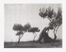 AMONG TREES I by SeaFairy