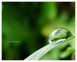 Water Drop by selley