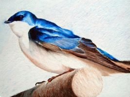 Swallow - Oil Pastel by Shadow-Tactician-VI
