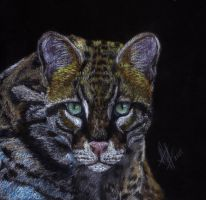 Ocelot by lonely-wolf-22