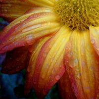 Rain Flower by paintthisred