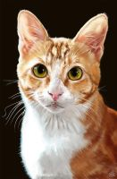 Realistic Cat Portrait by CrypticManifestation