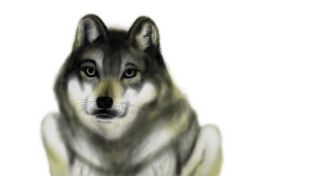 Wolf Painting by Niskin