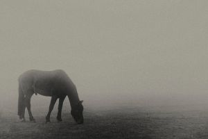 Morning Fog by mant01