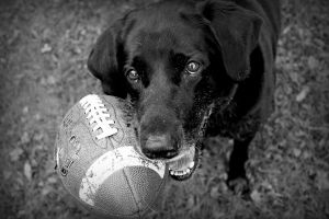 Please... Can You Throw My Ball? by pasofino6