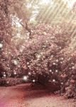pink forest by ayamjahe