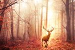 Golden Deer by ElyneNoir