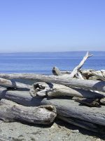 Driftwood Stock by chamberstock