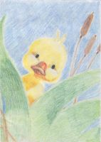 Ducky by goodie2shoes