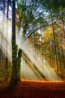Rays of life in sleepy forest by CosmoUN