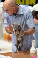 Cat show: Protest by TomiTapio