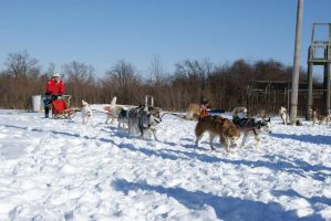Dog Sled Event 14 by NamekAngelIvy