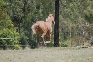 39 Galloping from behind by Chunga-Stock