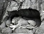 Dying lion by Disintegrated8