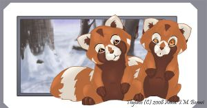 Red Pandas by Windshade888