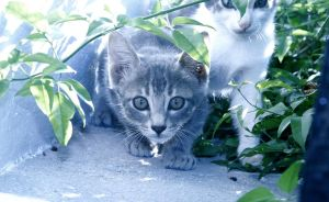 Spetses Kittens by 96jac