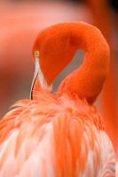 Pink Flamingo 14 by Art-Photo