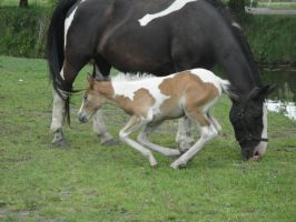 Anja - Bay Lying Tobiano Filly by Horselover60-Stock