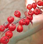 A branchful of berries II. by TheRafflesia