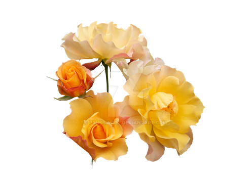 Yellow roses.PNG by PRUSSIAART