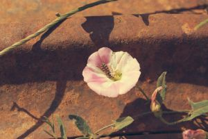 A flower next to rust by LightningChaser