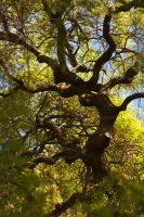 Tortuous Tree by TrollDuNord